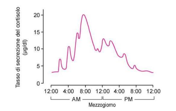 La curva cortisolo