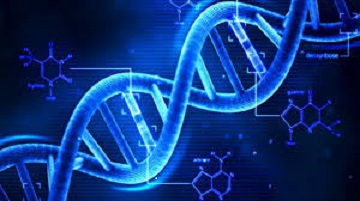 Epigenetic Nutritional Mapping. Le innovazioni scientifiche e mediche dell' Epigenetica