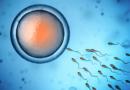 Stress Ossidativo e suoi effetti sulla fertilità maschile