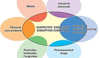 Effetti sui sistemi riproduttivi maschili e femminili dell'esposizione a sostanze che alterano il sistema endocrino