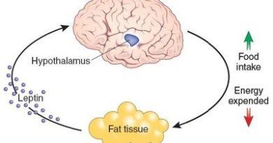 Capacità riproduttiva e variazioni della leptina durante il ciclo mestruale