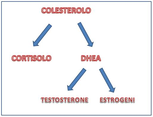 Metabolismo del cortisolo