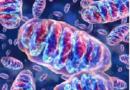 Alterazioni del DNA mitocondriale ovarico incidono sulla fertilità femminile