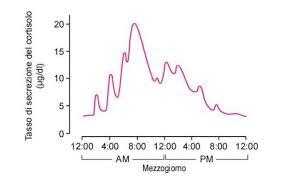 Meccanismo produzione del cortisolo